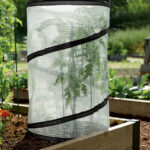 8589749_4171_pop-up-tomato-plant-protector-and-accelerator