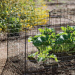 8596542_5582_5-panel-rabbits-and-critter-fence
