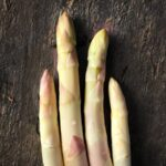 Asparagus-Precoce